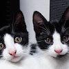 10 Rekomendasi Perlengkapan Perawatan Kucing
