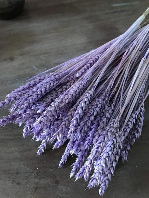 Dried Flower Purple Wheat Flowers 1