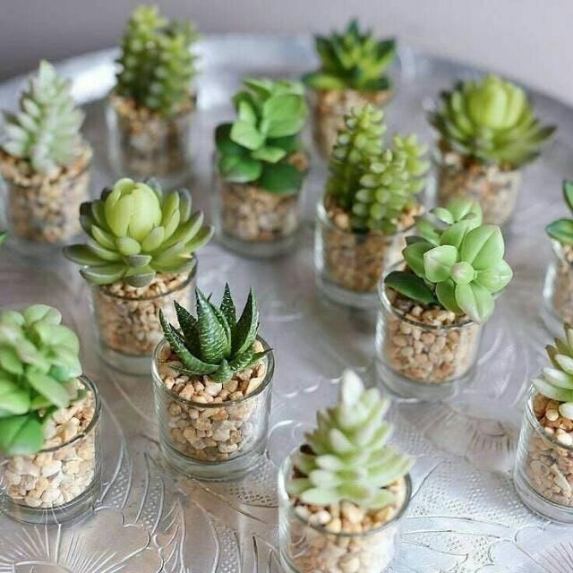 Terrarium Gelas Kaktus  1