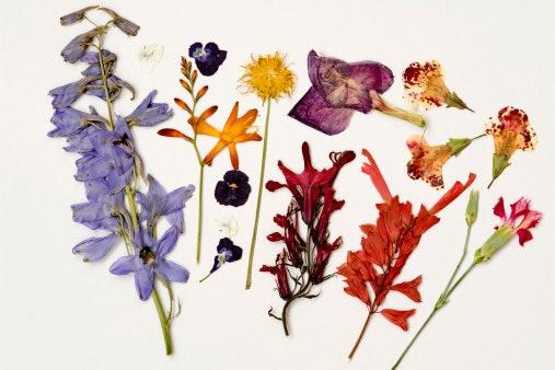 Pilih berdasarkan jenis bunganya