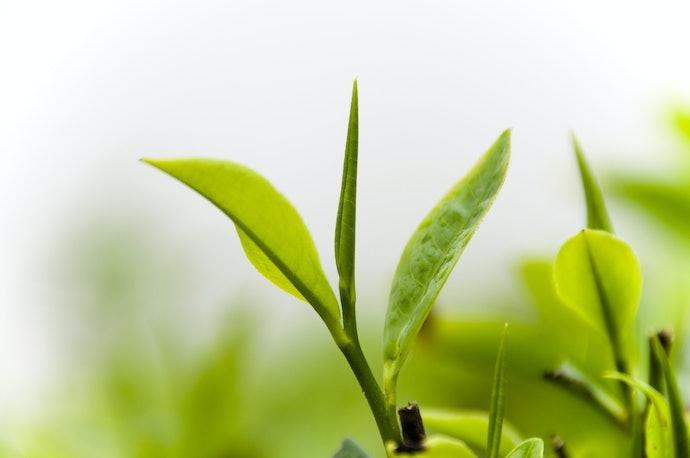 Ekstrak tumbuhan dan astaxanthin untuk menekan bau dan rambut lengket