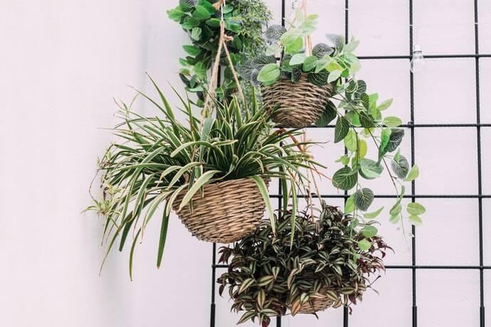Apa itu pot tanaman gantung?