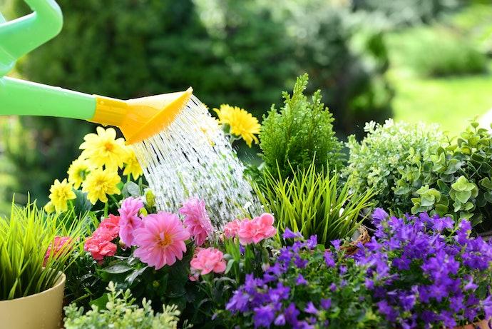Perhatikan kebutuhan air setiap bunga yang ditanam