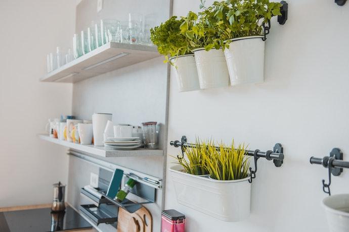 Tanaman dedaunan untuk tipe wall mounted