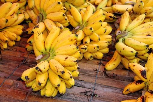 Pertimbangkan jenis pisang yang digunakan