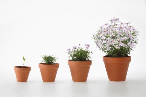 Periksa ukuran bunga agar sesuai dengan kebutuhan