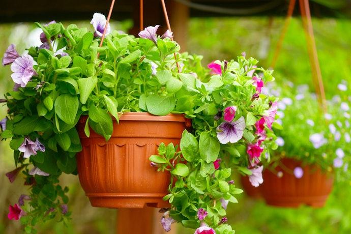 Periksa kapasitas dari pot tanaman gantung