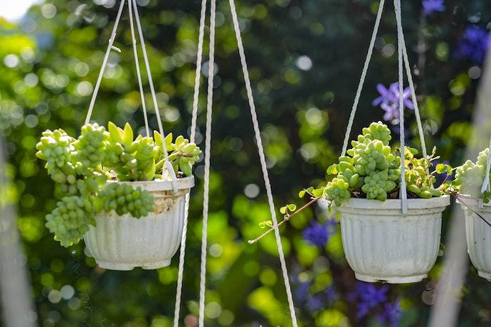 Sukulen dan air plant untuk tipe hanging