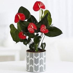 10 Rekomendasi Dekorasi Bunga Terbaik (Terbaru Tahun 2021) 2