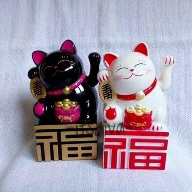 Kucing Hoki Boks 1