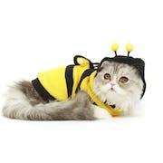 10 Rekomendasi Baju Kucing Terbaik (Terbaru Tahun 2021)